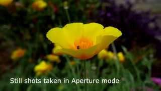 garden shots Panasonic Lumix GX8