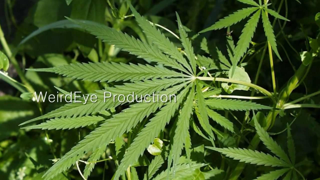 health benefits of marijuana youtube