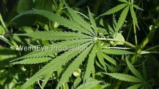 Health Benefits of Marijuana