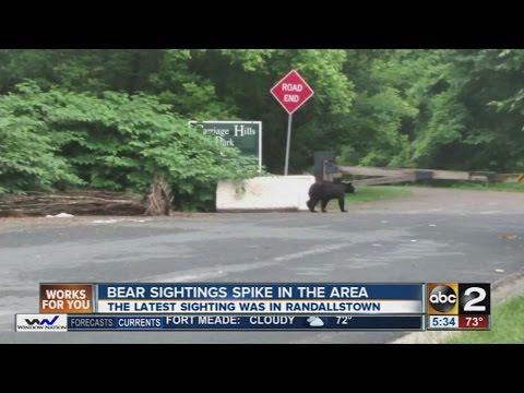 Bear sighting in Randallstown
