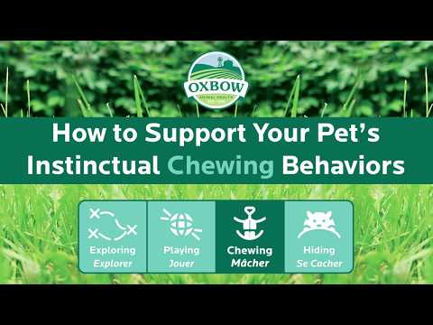 How To Support Your Small Pet's Instinctual Chewing Behaviors - Rabbits, Guinea Pigs, Chinchillas