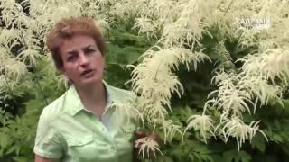 видео Садовые растения уход