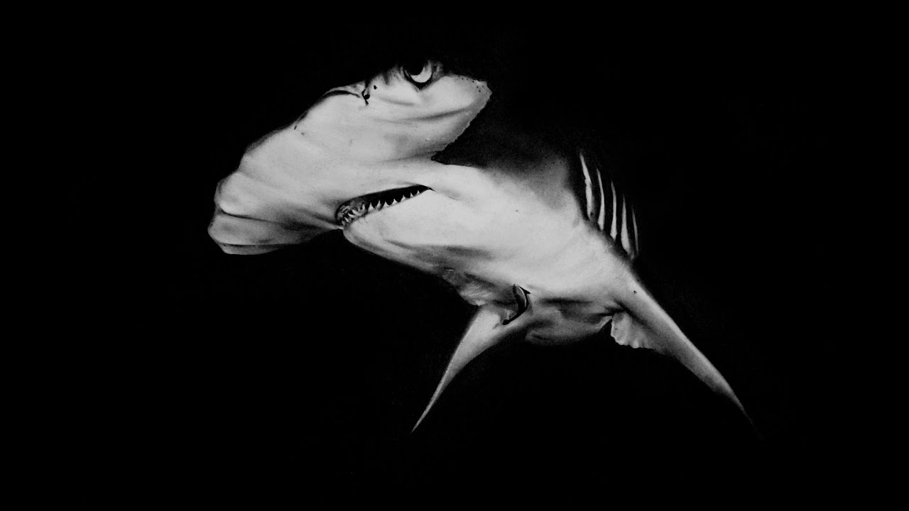realistic shark drawing hammerhead charcoal time lapse youtube