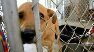 Dogs Unlimited Rescue