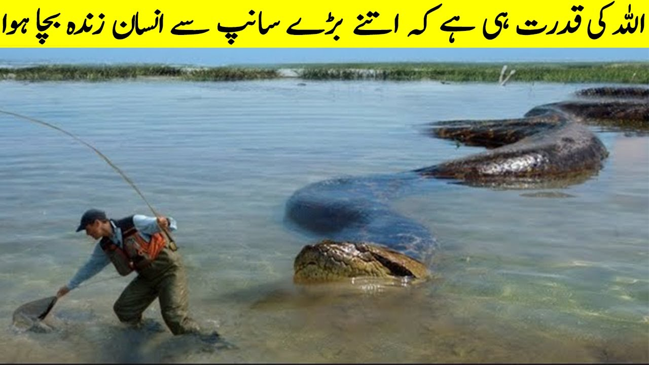 Unbelievable Giant Animals In The World  II Biggest And Abnormally Large Animals Of The World