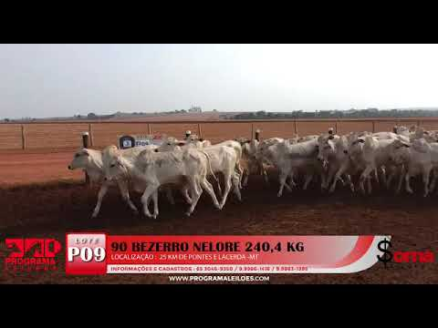 Lote P09