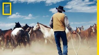 Wrangling Wild Horses in the Mountains of Montana   Short Film Showcase