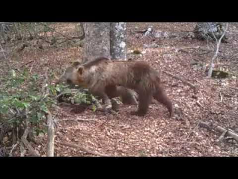 Parco Abruzzo, 365 giorni ripresi da telecamera nascosta tra fagg