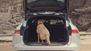 Jaguar Pet Pack | Аксессуары для собак