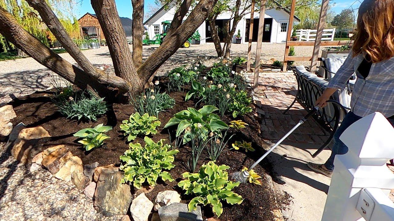 Download Digging Up & Moving 34 Hostas!!! 💚💪🥵 // Garden Answer