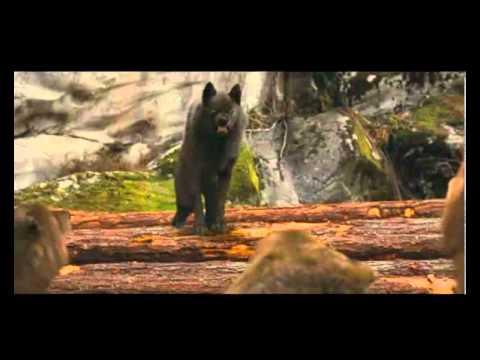 Breaking Dawn Wolf Scene & Jacob leaves sam's pack ٩(͡๏̯͡๏)۶
