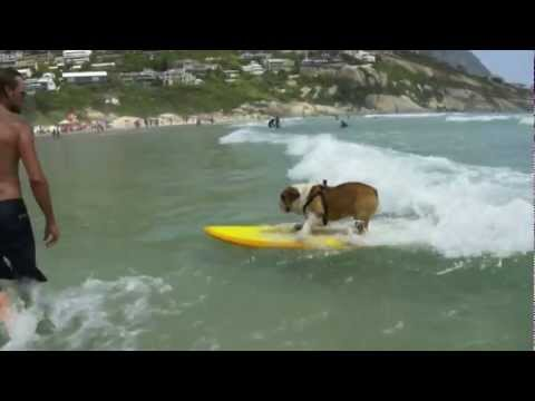 The Coolest Surfing Dog Ever!