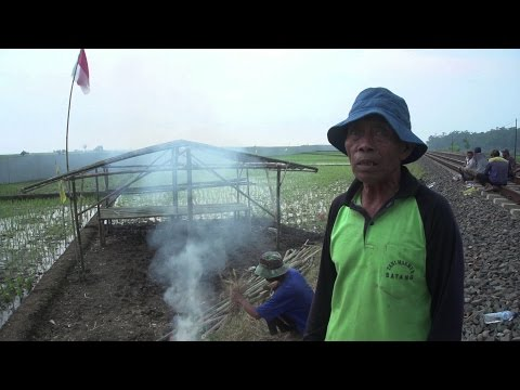 Greedy for coal, an Indonesian company takes farmers' land