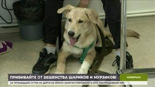 На Ямале началась бесплатная вакцинация животных против бешенства