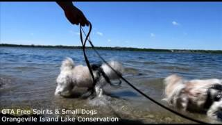 Island Lake Conservation Hike Plus Small Dogs Walk Meetup Group - July 3, 2016