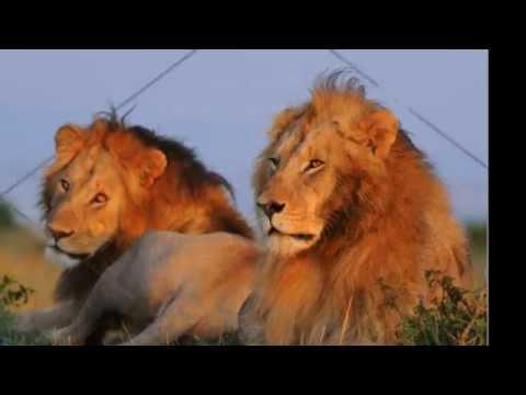 Animals Classification | Animal Taxonomy: kingdom, phylum, class, order, family, genus | DISCOVER