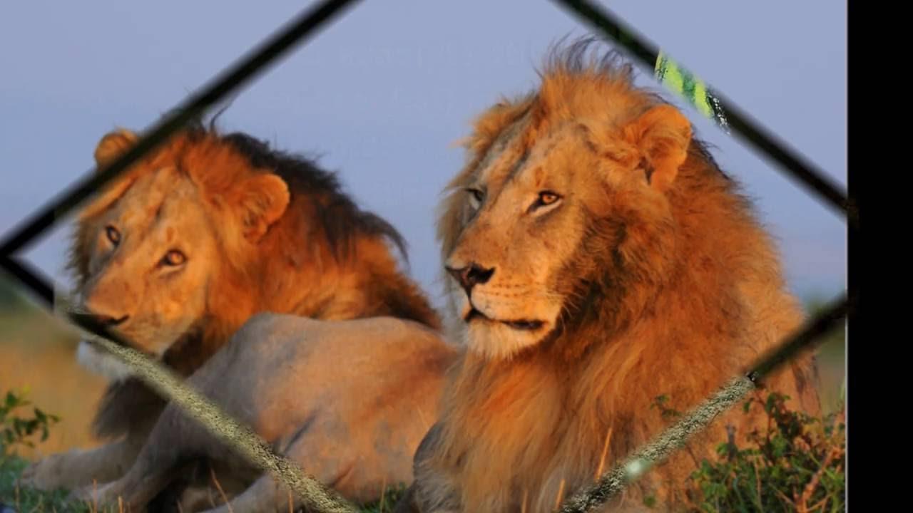 Animal Genus Species Kingdom