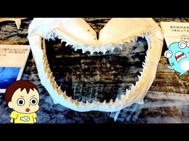 【ウミガメのアニメ】串本海中公園その2!サメニンが飼育員さんになるよ!