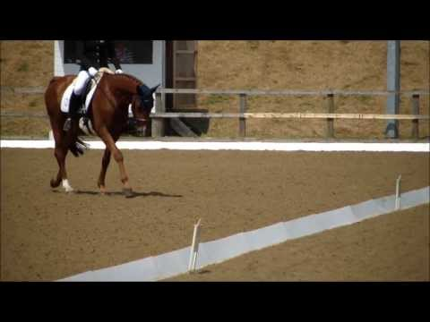 novice 22 dressage test download