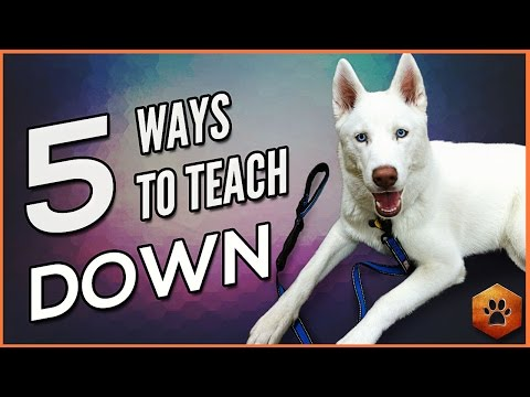 How to Teach a Dog to Lie Down - 5 Alternate Methods for All Dogs