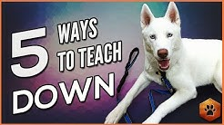 Teach a Dog to Lie Down - 5 Alternate Methods for All Dogs