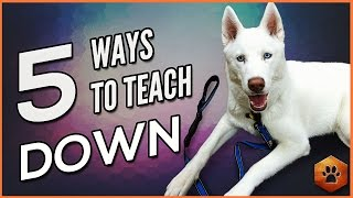 Teach a Dog to Lay Down - 5 Alternate Methods for All Dogs