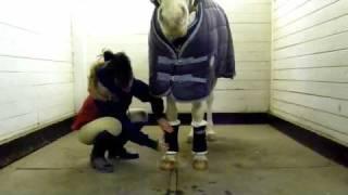 HORSES-FUN/EDUCATIONAL -STANDING WRAPS