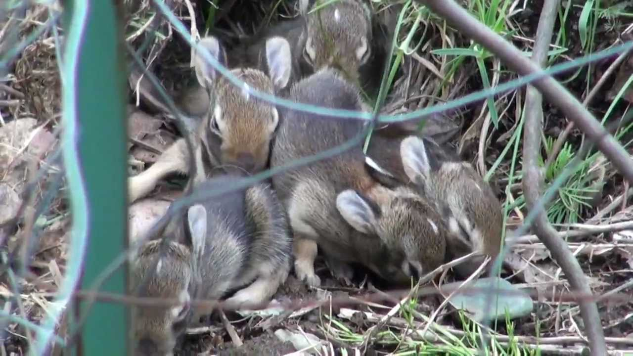 how to keep wild rabbits out of my garden