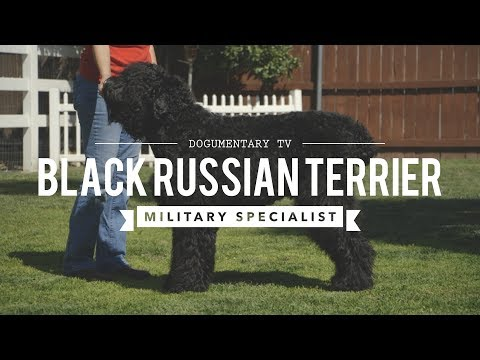 BLACK RUSSIAN TERRIERS MILITARY MADE MILITARY GRADE