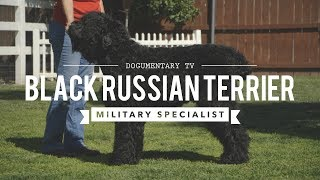 ALL ABOUT: BLACK RUSSIAN TERRIERS MILITARY MADE MILITARY GRADE