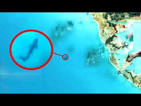 Megalodon Captured On Google Earth Megalodon Sighting