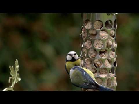 Why Should We Feed Wild Birds?