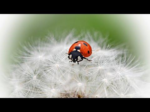 Названия насекомых (как выглядят насекомые) видео для детей