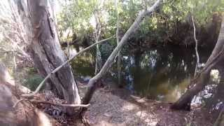 Tarpon Fishing - Cairns