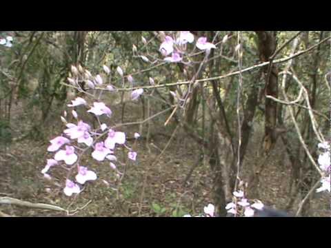 Orchids In Habitat Youtube