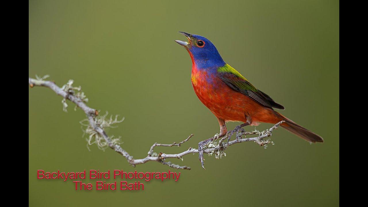 Backyard Bird Photography - The Bird Bath