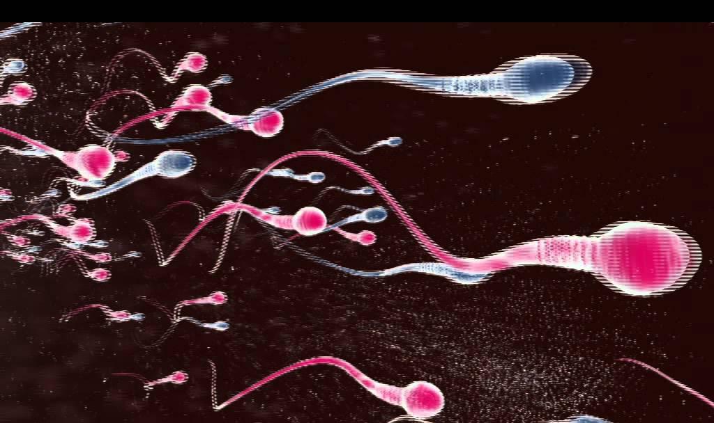 befruchtung mensch video