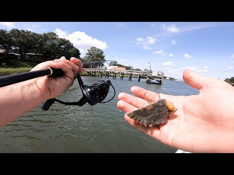 Fishing With Blue Crab On A Dock For Crazy Redfish Action