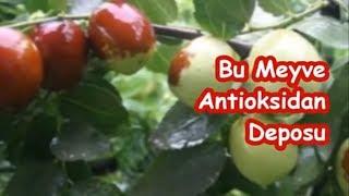 Bu Meyve Antioksidan Deposu