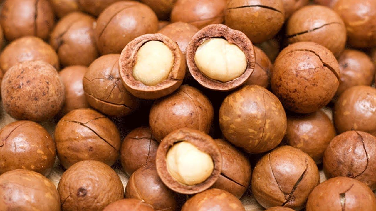 14 Amazing Health Benefits Of Macadamia Nuts
