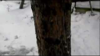 Очистное сооружение Тверь Зимой(, 2013-04-01T09:19:06.000Z)