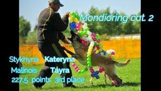 "MR2 ""Mafia"". Stykhyna Kateryna Mondioring cat. 2 Malinois Tayra 227.5 points 3rd place"