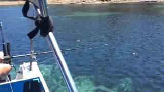 Squid fishing nsw
