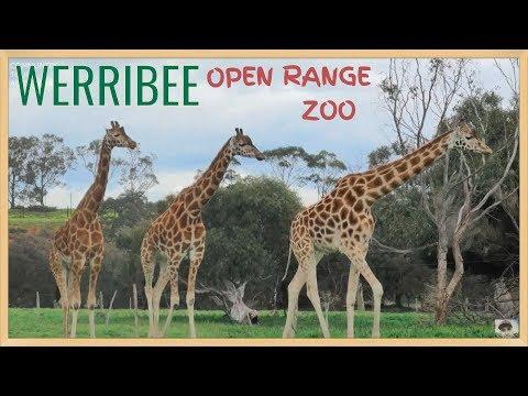WERRIBEE ZOO OPEN RANGE SAFARI TOUR - MELBOURNE ZOO 2019