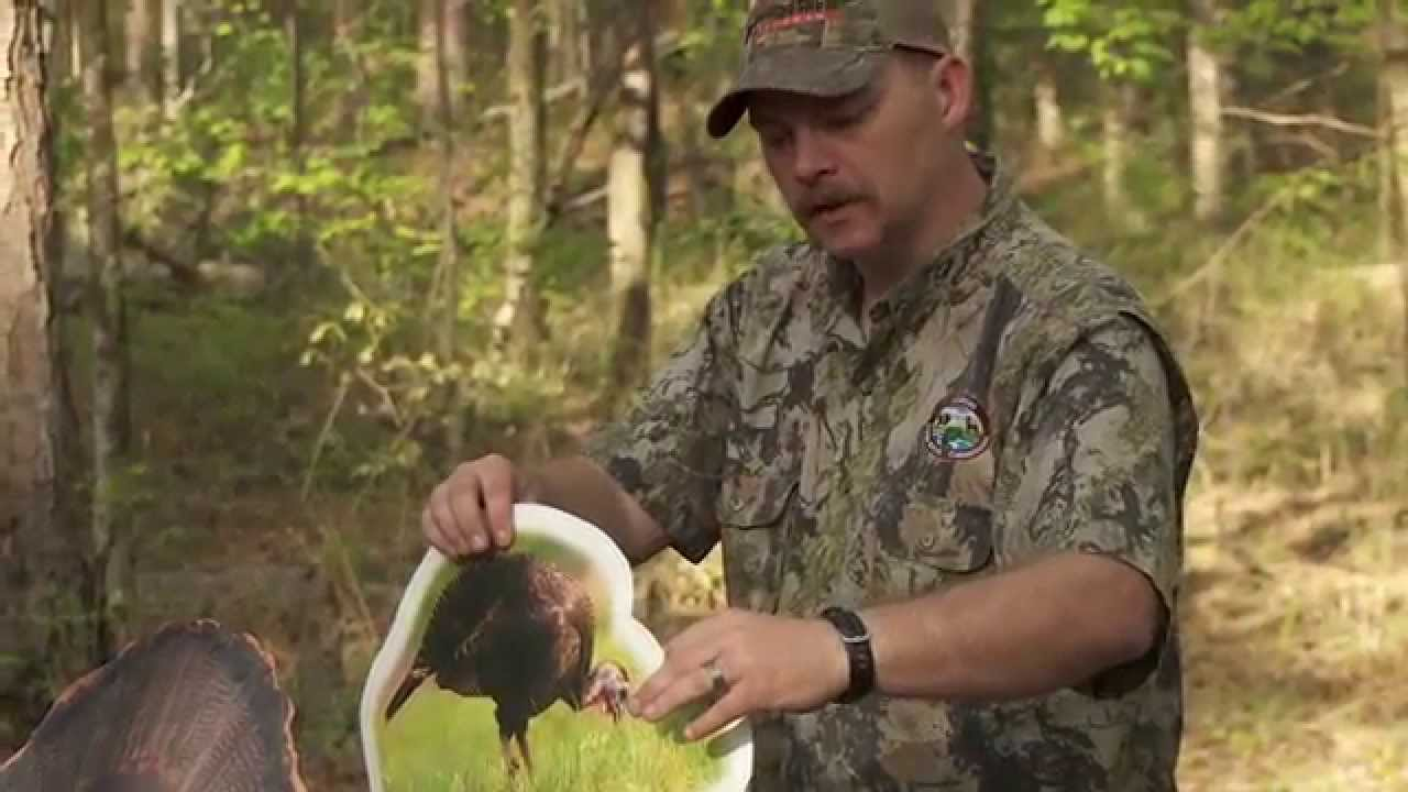 Agfc 2015 youth turkey hunt youtube youtube for Arkansas game and fish license