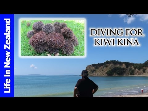 DIVING for KIWI KINA! | Life In New Zealand