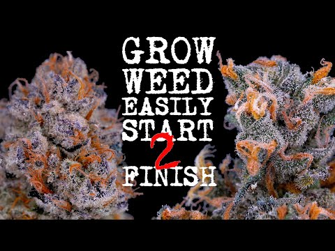 EASIEST WAY TO GROW WEED FROM START TO FINISH (FULLY EXPLAINED) ORGANIC SUPERCOCO | JUST ADD WATER!!