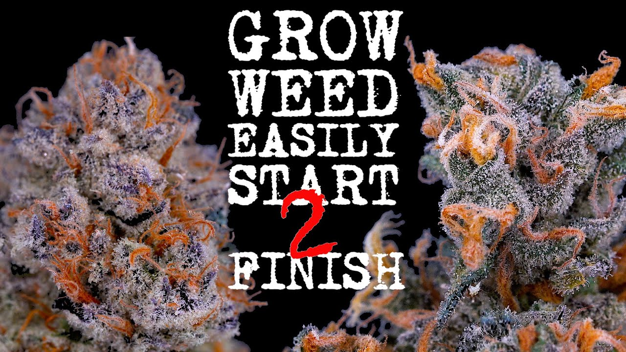 Download EASIEST WAY TO GROW WEED FROM START TO FINISH (FULLY EXPLAINED) ORGANIC SUPERCOCO | JUST ADD WATER!!