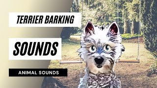 When A Terrier Barking - Sound Effect - Animation