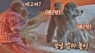 ENG│제로 배고파~? 모닝 맘마 놀이하는 태연(TAEYEON)&제로❤️ 펫키지(petkage) 4회